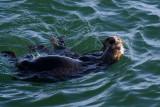 Warf Otter III.jpg