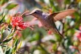 Hummingbird III .jpg
