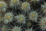 Hedgehog Cactus Pattern