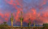 Southern Arizona -  Desert Beauty