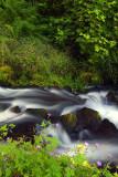 Columbia River Gorge - Wahkeena Creek