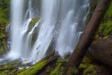 Proxy Falls Log Foreground