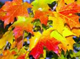 Fall-2006