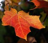 Autumn Leaves-2007