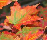 Autumn Leaves -2007