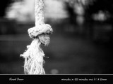 Knot 18800021 copy.jpg