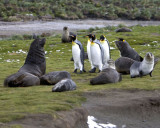 Fur seals and King Penguins