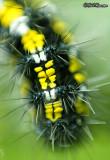 Caterpillar Detail