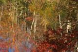 Autumn reflections.