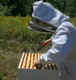 IMG_3888 l apicultrice.jpg
