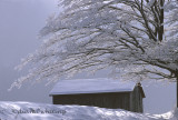 Skaneateles Ice Storm