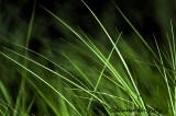 Grass Impressions