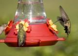 Hummingbird Galleries