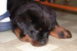 Karen's New Puppy - Kendall