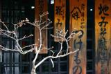 Japanese spring 2007