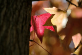 20061207 -- 5224.jpg  Canon 5D + Sigma 150mm / 2.8 macro @ f / 5.6, 1/200, ISO 100