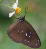 beautiful_butterflies_