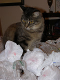Rocky with Plastic Bags