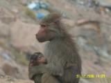 Concerned mother near Al-Habla village-ABHA.jpg