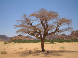 Standing Alone in Desert.jpg