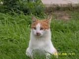Cat-1.jpg