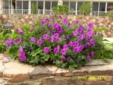 Flower-9.jpg