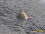 Shells 3.JPG