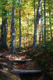 Steps on a park trail