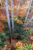 Local Scenery #4 (Birch Knob Road)