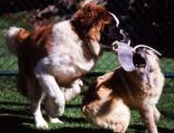 Max & Bubba playing