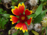 FLOWER (ORIGINAL FILE - ISO 200 - NO PP)