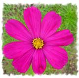 july07flowers