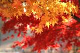 Fall 2006 Olympic Park