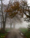 Sparks Lane in the Fog