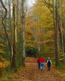 Autumn Stroll Along the Little River Trail