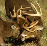 The Rut Continues