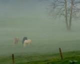 Horses and Fog - Cades Cove