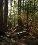 Morning Walk - Grotto Falls Trail