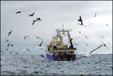 Trawler groupies