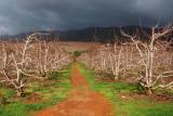 Grabouw Fruit Trees shot with Nikon D50
