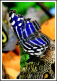 A Butterfly Abstract in Canada