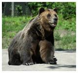 Visiting Uncle Bear  At the Toronto Zoo