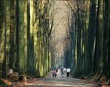Capucijnendreef, arboretum de Tervuren.