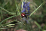 Love this photo ,and thanks Mr . Beetle for showing for my lens !!!!