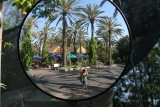 Love all the palm trees in this reflection