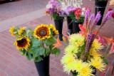 Love sun flower's had them on my busness logo .