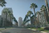 Love it , nice palm lined street !!!