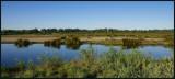 Le Teich - Parc Naturel Régional