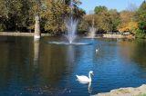 Swan in Falls Park, Pendleton, Indiana