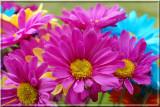 Carnations08.JPG